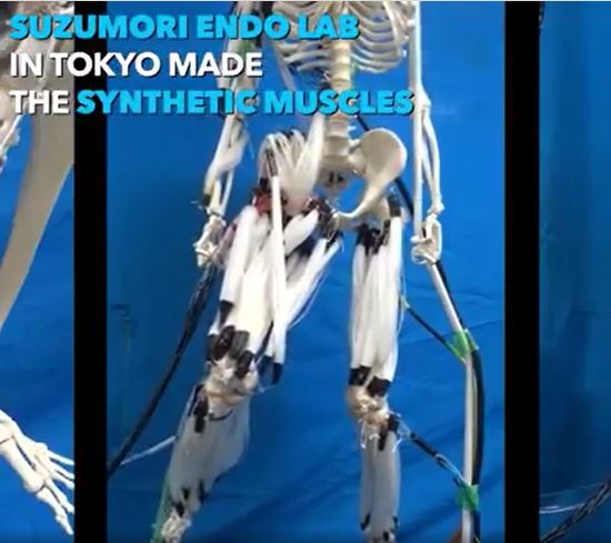 This humanoid robot's artificial muscles work the same as human muscles.